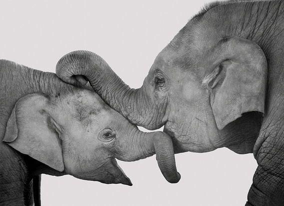 Liebe von Mutter und Kind, Kuscheln Elefanten