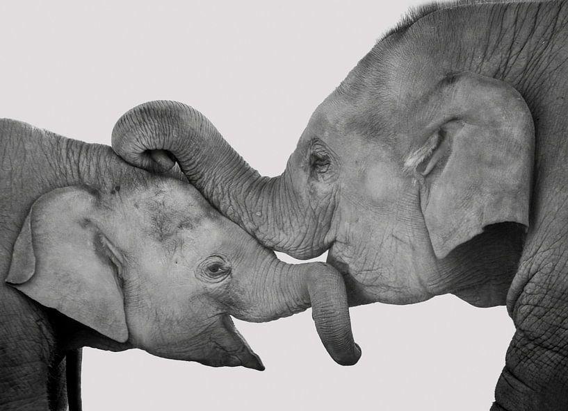 Liebe von Mutter und Kind, Kuscheln Elefanten von Rietje Bulthuis