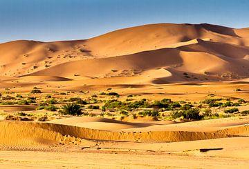 Sahara Woestijn Landschap  van Mario Brussé