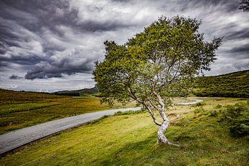S tree in the curve van Freddy Hoevers