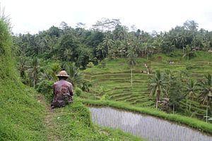 Man bij rijstveld