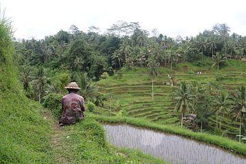 Man bij rijstveld von Kevin Kardux