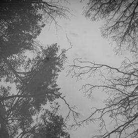 Spiegelbeeld van bomen   reflectie   zwart wit van Mascha Boot
