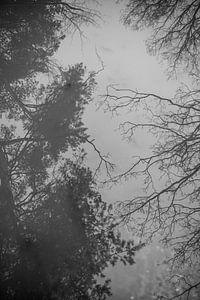 Spiegelbeeld van bomen | reflectie | zwart wit