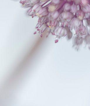 Sierui in soft focus van Minie Drost