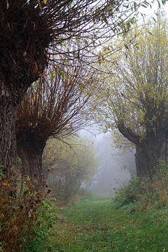 knotwilgen in herfstmist van Karina Baumgart