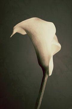 Callas van Nico Garstman
