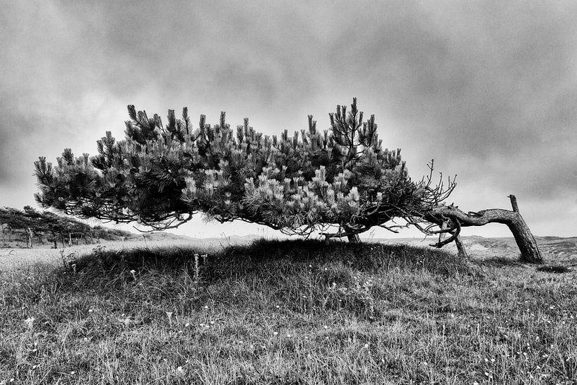 Dünenlandschaft mit einsamer Kiefer von Floris Kok