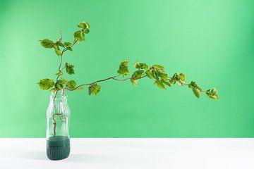 moderne stilleven groen