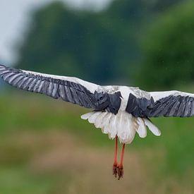 Wegvliegende ooievaar. van Marcel Pietersen