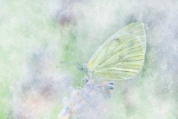 Papillon 11 sur Silvia Creemers