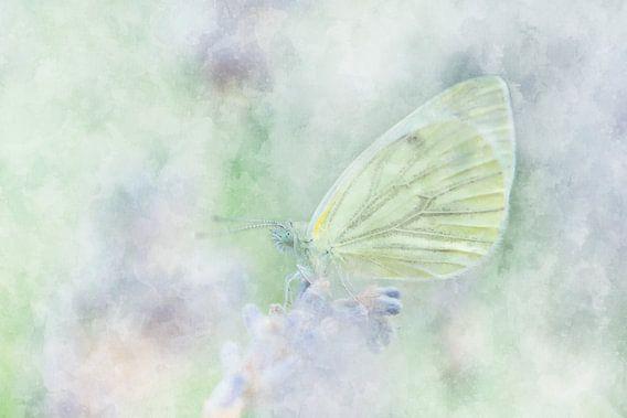 Vlinder11
