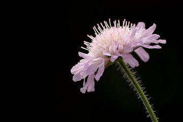 Flower von Jodi van Dam
