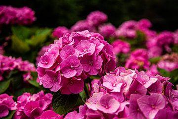 Blumen in Dordrecht von Hartsema fotografie