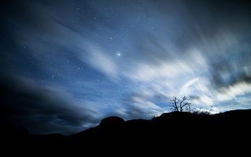 Einsamer Baum in der Nacht von Lennart Verheuvel