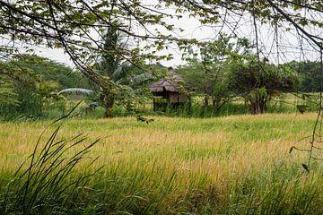 rijstveld met hut van Rony Coevoet