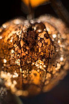 Lampion van Helen Smeeman