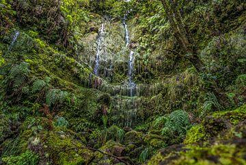 Grünes Paradies von Friedhelm Peters