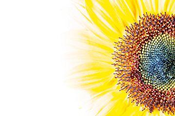 Zonnebloem structuur van Hans Wijnveen
