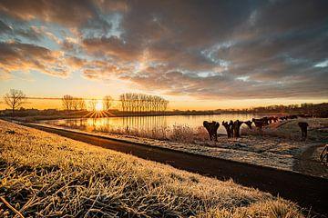 De koude ochtend van Wesley Kole