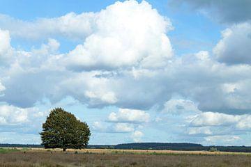 Eenzame boom op de Veluwe van MaSlieFotografie