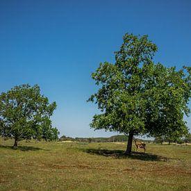 2 arbres et un daim sur Martijn Tilroe