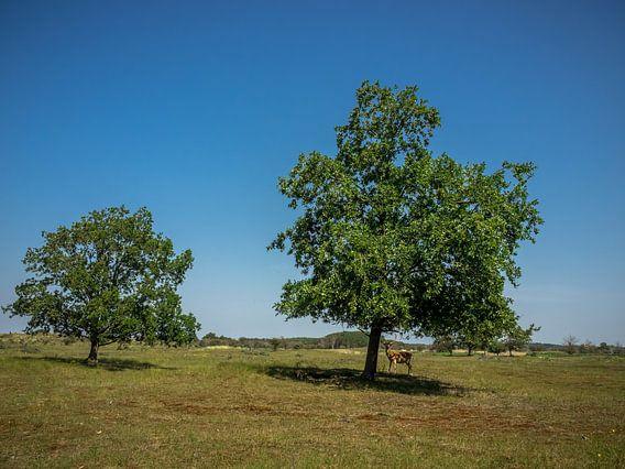 2 Bäume und ein Damhirsch