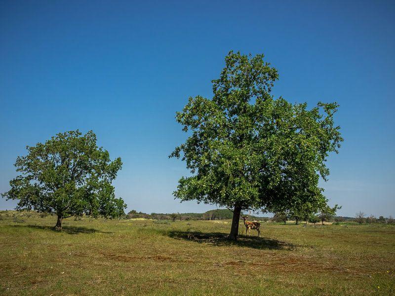2 Bäume und ein Damhirsch von Martijn Tilroe