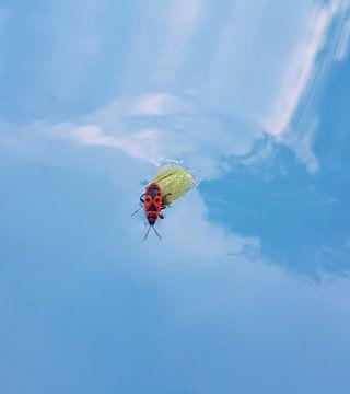 meeliftende tor in zwembad  van Chantal Koper