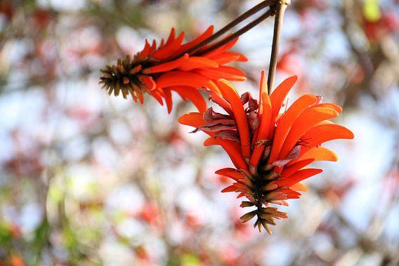 The Orange Tree Blossom