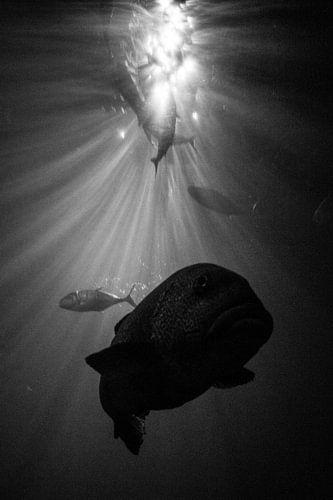 Vissen tussen de lichtstralen van