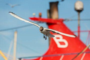 Vögel | Lachmöwe - Insel Texel von Servan Ott