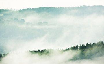 Nebliger Morgen von Danny Slijfer Natuurfotografie
