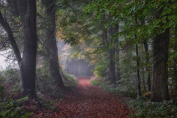 Promenade matinale brumeuse sur Cor de Hamer