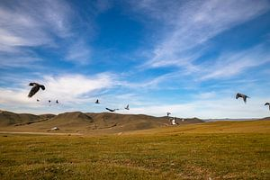 Mongolië van Valerie Tintel