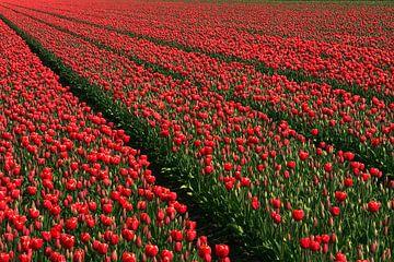 Tulpenveld von Bob Bleeker