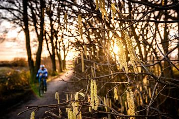 Frühlingsblüten in der Sonne von Fotografiecor .nl