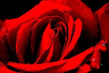 Weiche Seite der Rose von Masselink Portfolio