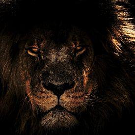 Lion le Roi sur H.m. Soetens
