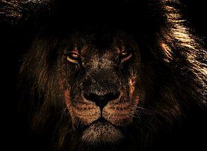 Lion the King van H.m. Soetens