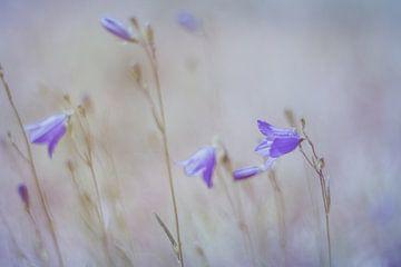 Zomerbloemen in Pastel van Marianne Twijnstra-Gerrits
