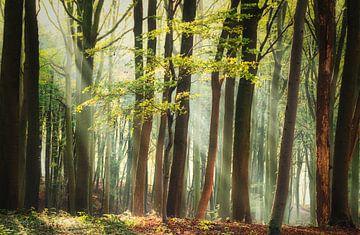 Fris en Groen van Joris Pannemans - Loris Photography