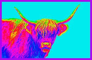 Kleurig portret van een Schotse Hooglander
