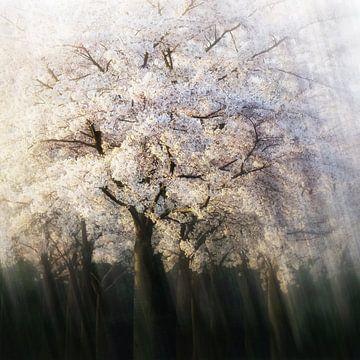 Blossom in Motion sur Lars van de Goor