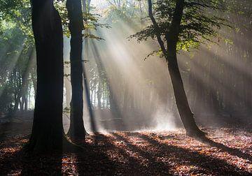 Der dampfende Wald von Paul Begijn