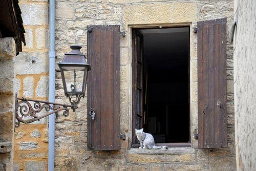 Kat in het venster. van Maren Oude Essink