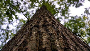 Prachtige boom in de natuur van Jeremy Teijn