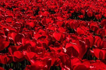 Rode tulpen von Erika Gallegos