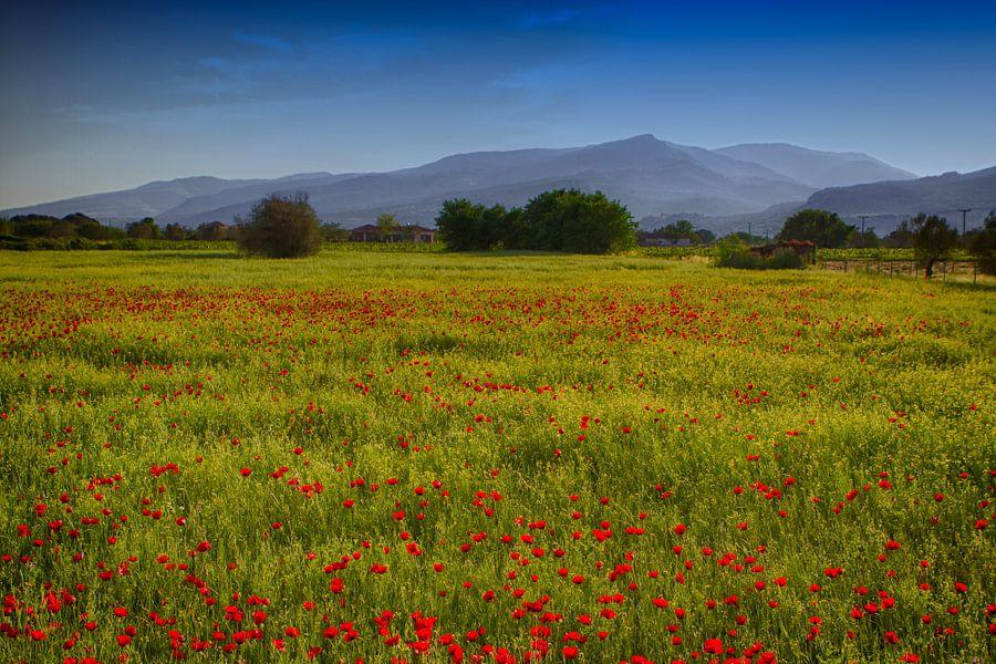 Fields of Joy van Leanne lovink