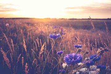 Champ de fleurs au soleil sur Fotografiecor .nl